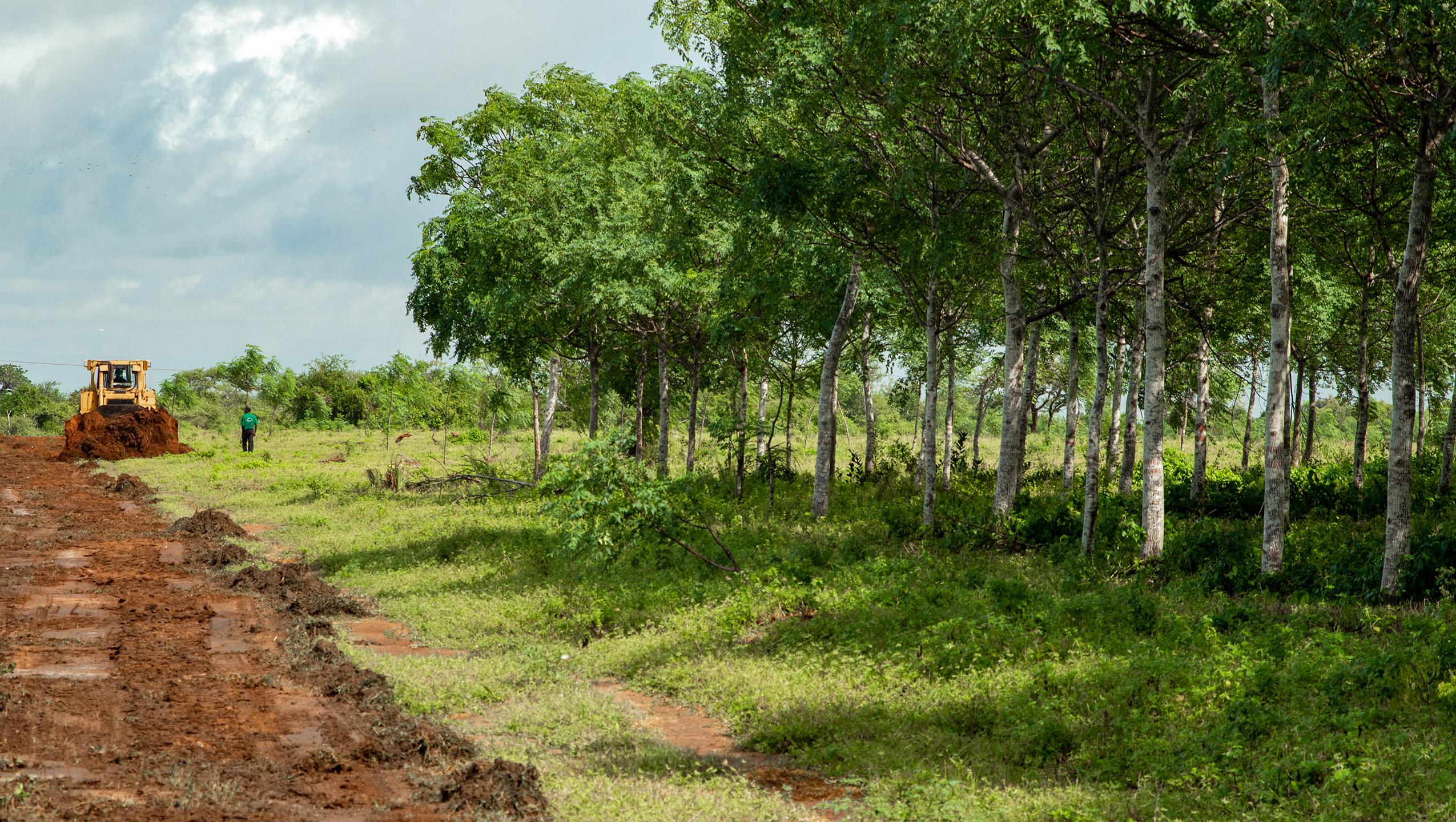 Træplantning reducerer klimatruslen