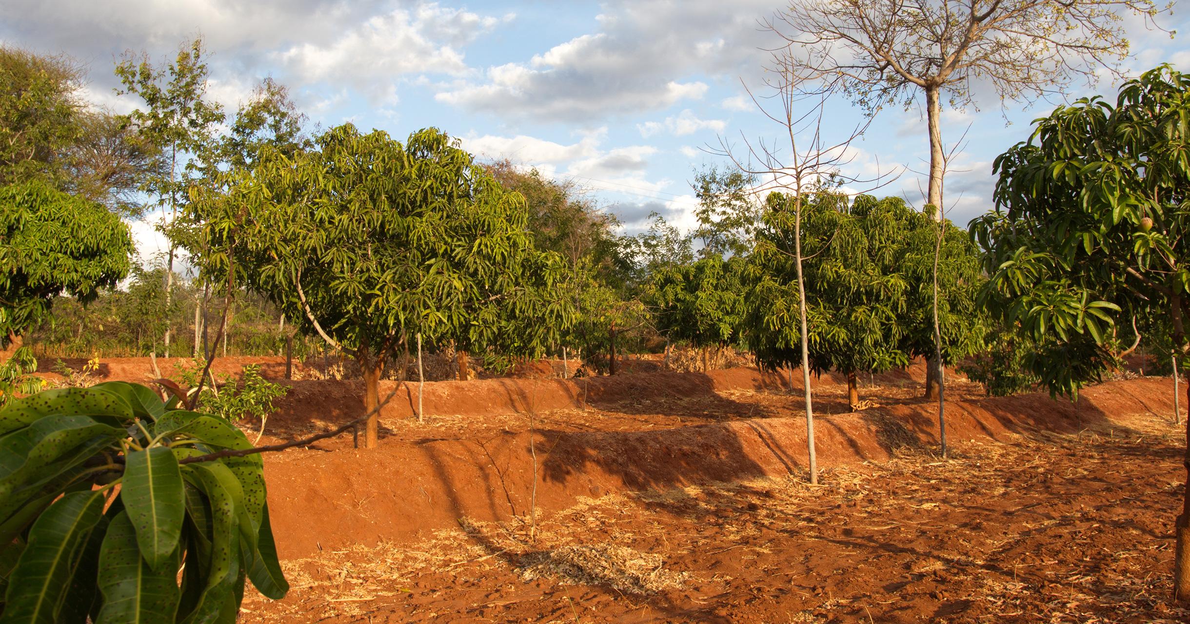 Udbetalingen for træerne er færdig